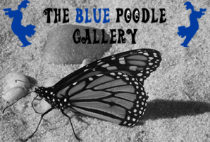The Blue Poodle Gallery
